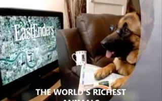 Гюнтер iv — cамый богатый пес в мире