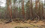 Где находится пьяный лес