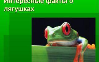 Интересные факты о жабах
