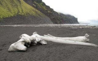 В исландии 400 лет действовал закон — убивать басков на месте