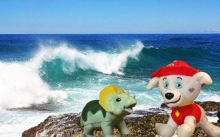 Интересные факты о волнах
