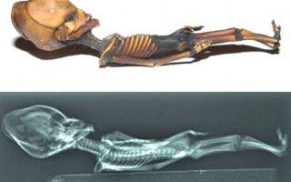 Гуманоид атакамы – загадочная мумия из американской пустыни
